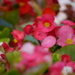 bedding-plants_7590404302_o