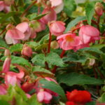 bedding-plants_7590410492_o