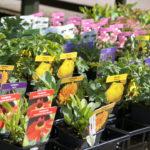 herbaceous-perennials_7591051242_o