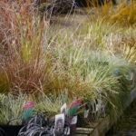 ornamental-grasses_7590971128_o